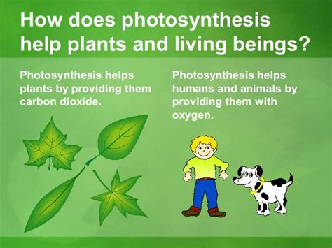 how do animals help photosynthesis final