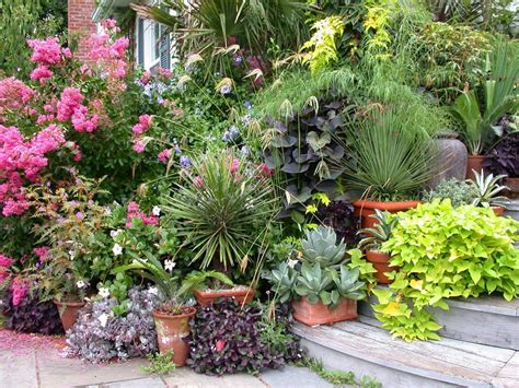 Potted Plant Ideas For Good Gardening Activity