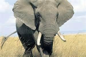 elephant 178574698 192534