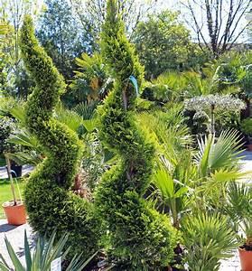 Gelbe Winterharte Pflanzen : gelbe baumzypresse palmentraum ~ Markanthonyermac.com Haus und Dekorationen