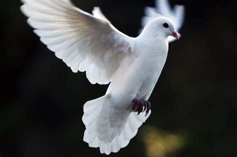dove poetry memorials release  dove