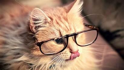 Cool Slike Cat Ocenite Backgrounds Cats Desktop