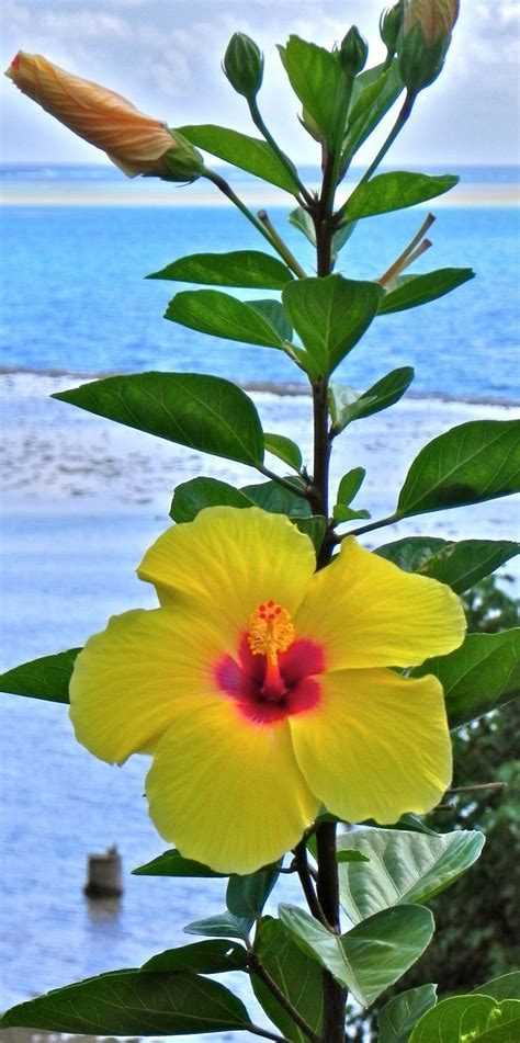 tropical plants of hawaii 17 best ideas about tropical flowers on pinterest exotic flowers tropical plants and hawaiian