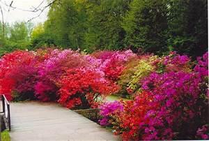 Plante De Bordure : nice plante de bordure vivace 8 historique avec ses anciennes sortes de bulbes au jardin ~ Preciouscoupons.com Idées de Décoration