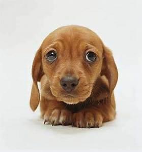 Isak Atilla: En hund har ritat på mattan...