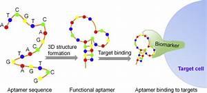Oligonucleotide Aptamer