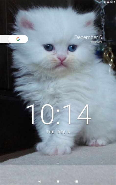 cat wallpapers android apps  google play