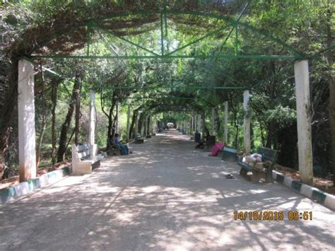 Zoological Garden Mysore Zoo Entrance Avenue Picture Of Sri Chamarajendra