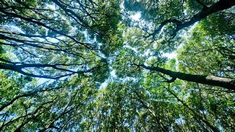 21 Reasons Why Forests Are Important  Mnn  Mother Nature