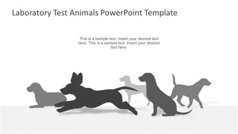 rats powerpoint templates