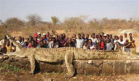 5 Of The World's Biggest Crocodile Ever Recorded