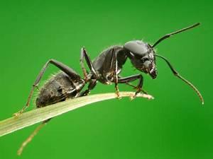 Ameisenplage Im Garten Bekämpfen : ameisen bek mpfen ratgeber auf ~ Articles-book.com Haus und Dekorationen