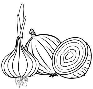 onion  seasoning coloring page