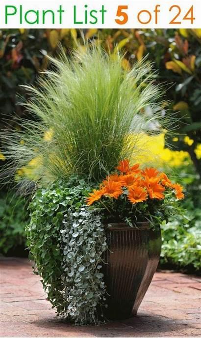 Container Garden Plants Planting Pot Flower Plant