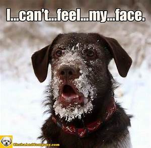 Funny Dog Faces With Quotes. QuotesGram