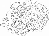 Cauliflower Healthy Coloring Pages sketch template