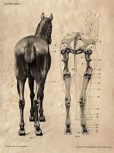 Horse Anatomy Skeleton Prints