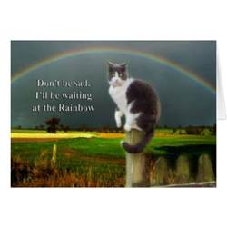 pet loss quotes cats quotesgram