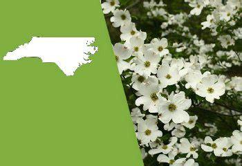 north carolina state flower  flowering dogwood