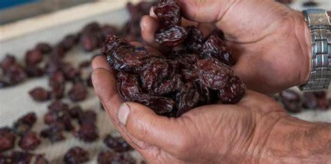 bureau interprofessionnel du pruneau ée pour le pruneau d agen l arboriculture fruitière