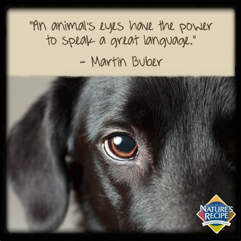 dog eye quotes quotesgram