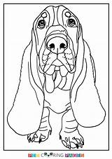 Hound Basset Coloring Sheets Colouring Printable Getdrawings Getcolorings sketch template
