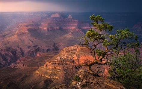 arizona desert bonsai trees grand canyons south rim