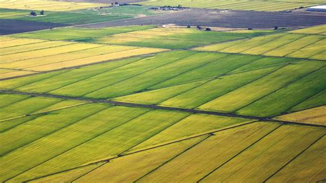 rice farmers turn sustainability  carbon credits