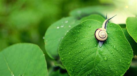 Snail Hd 6894203