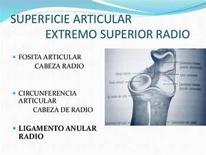 Anatomia Y Fisiologia Articular Del Codo