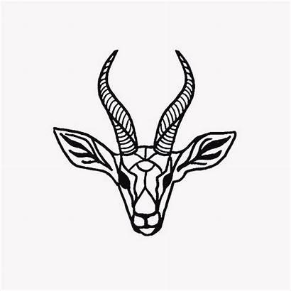 Drawing Gazelle Sketches Sketch Drawings Animal Sketching