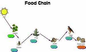 Plants in NanoPics: food web relationships producer ...