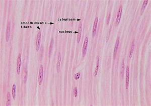 HISTOLOGY LAB WITH ANSWERS