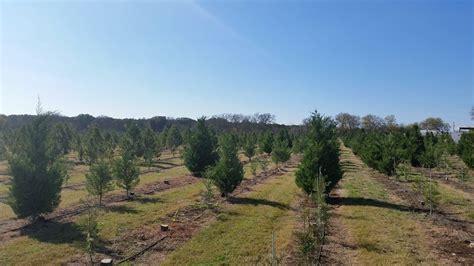 pipe creek christmas tree farm 78063 pipe creek 805 phil