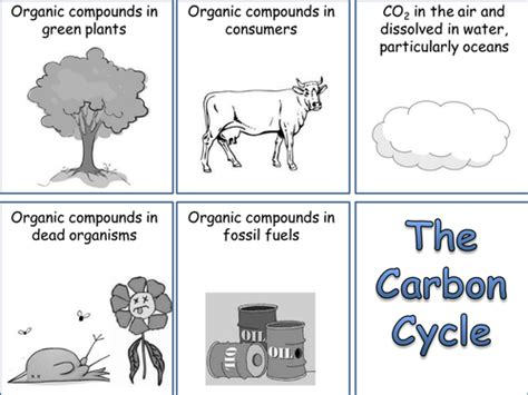 carbon cycle card sort  whitney teaching resources