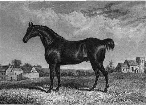 extinct norfolk horse breeds horses recently trotter commons pd wikimedia engleheart