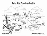 Prairie Coloring Habitat Pages Habitats Animal American Biome Animals Biomes Dog Grassland Science Exploringnature Desert Map Worksheet Drawing Printable Draw sketch template