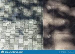 Floor, Tiles, Texture, Tree, Branches, Silhouette, Garden, Outdoor, Abstract, Background, Stock, Photo