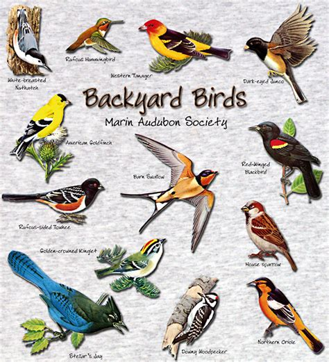 georgia bird identification chart pictures to pin on