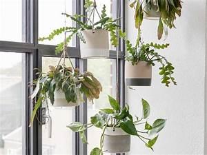 Plantes à Suspendre : 10 id es d co pour vos plantes joli place ~ Premium-room.com Idées de Décoration