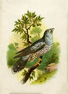 Beautiful Old Singing Speckled Bird Image - Thrush