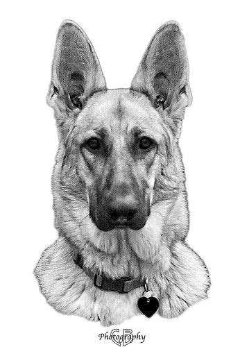 German Shepherd Dog Tattoo Sketch photo - 1 | Ink | Pinterest | German shepherd dogs and
