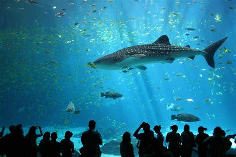 visitez les plus beaux aquariums de euroloisirs fr