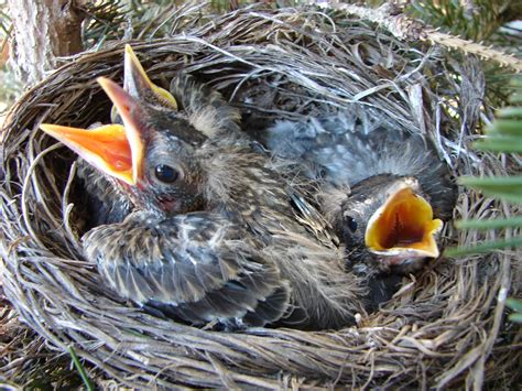 what to do if you find a fallen baby bird