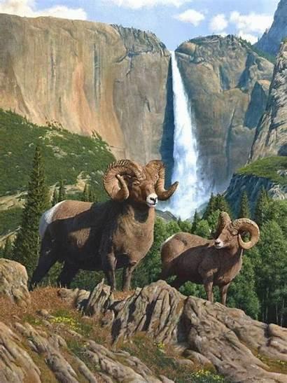 Wildlife Animals Paintings Scary Burgess Steve Animal