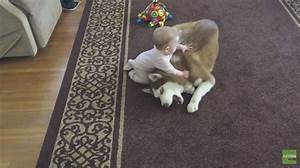 Splash and Dash for Dogs: Siberian Husky Plays with Baby ...