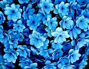 eletragesi: Blue Flowers Tumblr Background Images