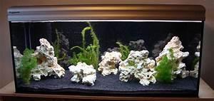Tiere Für Aquarium : fische aquarien tieranzeigen seite 2 ~ Lizthompson.info Haus und Dekorationen