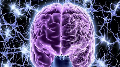 Digital Brain Wallpaper by Hd Wallpaper 61 Images