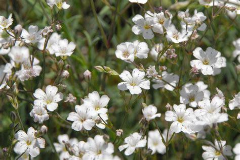 Schöne Kleine Weiße Blumen Foto & Bild  Pflanzen, Pilze